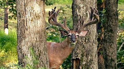 Bucks-like-these_12_400px