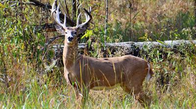 Bucks-like-these_15