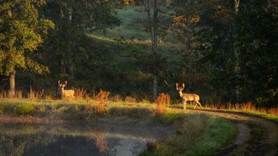 Bucks-like-these_19