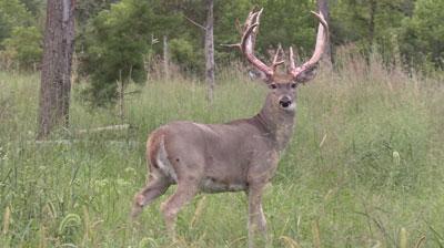 Bucks-like-these_22