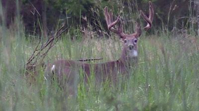 Bucks-like-these_29